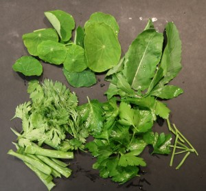 nasturtium and other green leaves for pesto making